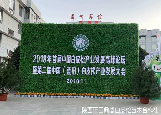 中国蓝田:白皮松之乡的产业之梦
